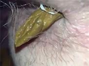 Scheisse aus haarigem Frauenarsch